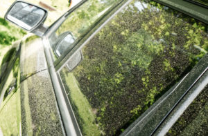 Car with Pollen
