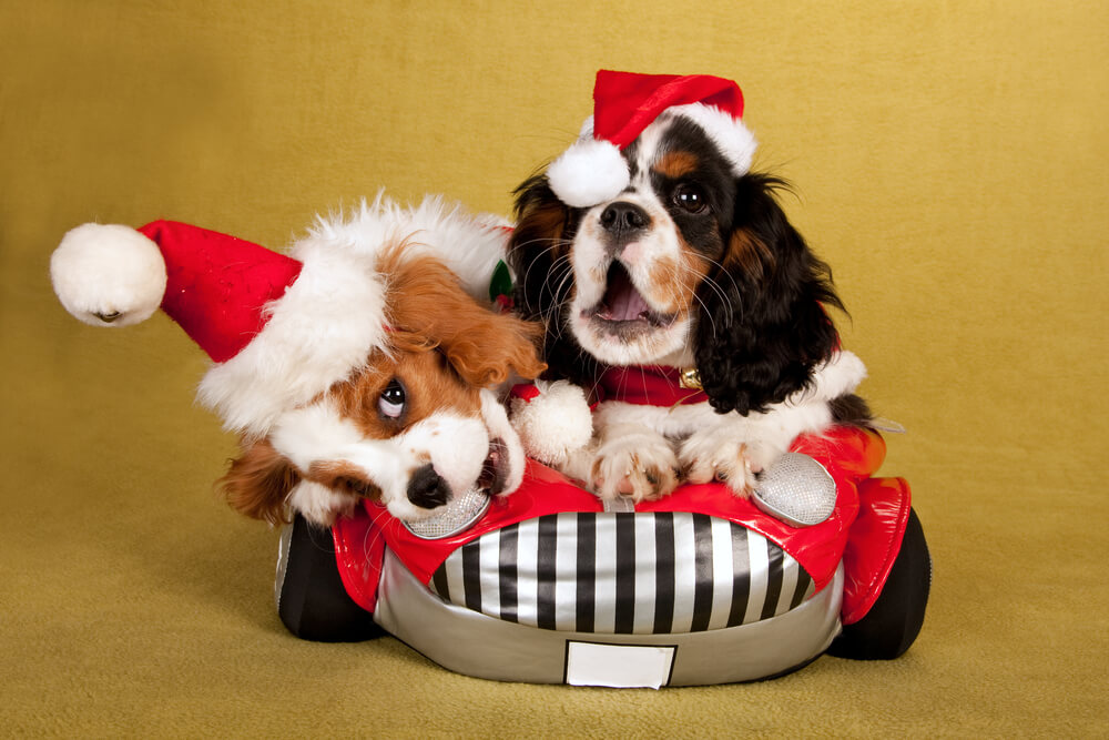 Cute Christmas puppies in car - Holiday car maintenance travel tips